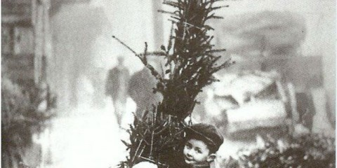 kid_with_a_tree