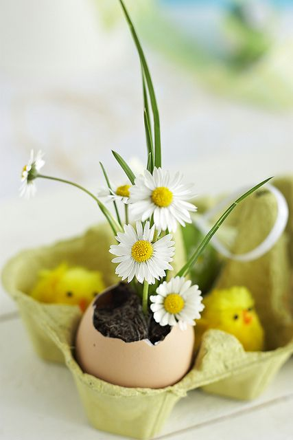 eggs_and_flowers_2