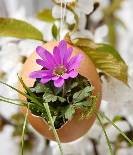 eggs_and_flowers_7