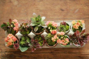 small_easter_gardens_2